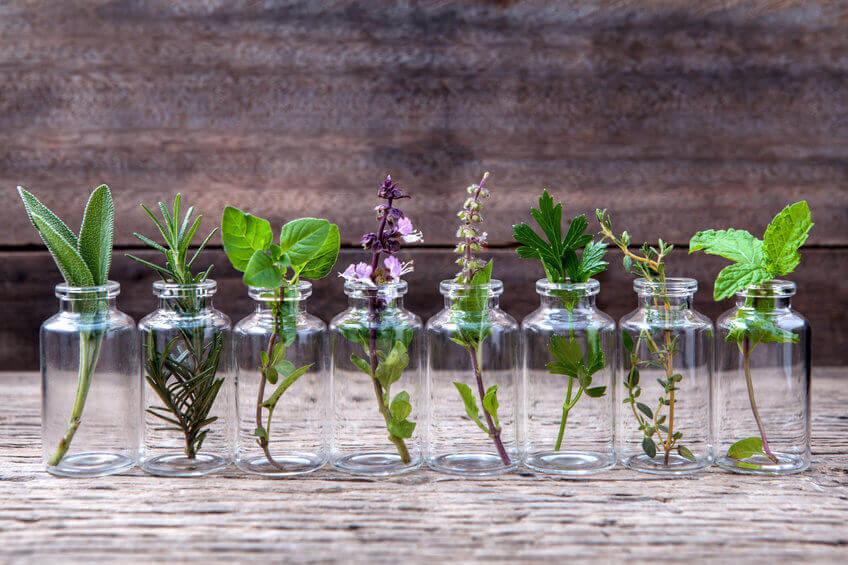 תחליף טבק טבעי עם טרפנים וצמחים רפואיים הניתנים לעישון